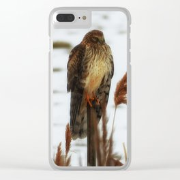 Northern Harrier Clear iPhone Case