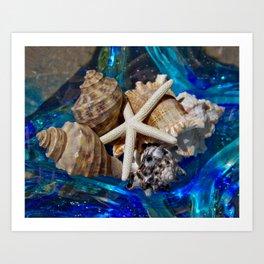 Seashells 6 Art Print