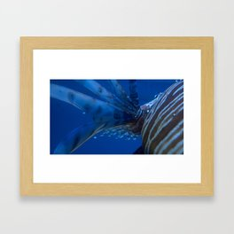 Lion Fish  Framed Art Print