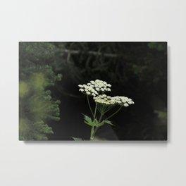 Flowering In Darkness Metal Print