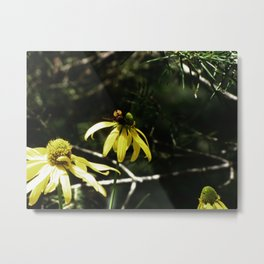 Nectar Collector Metal Print