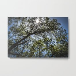 Upwards Metal Print