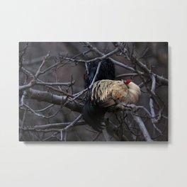 Sleeping Rooster Metal Print