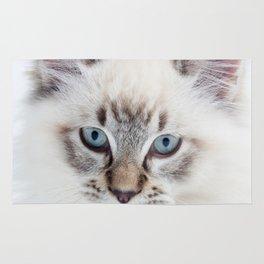 Blue Eyed Kitty Rug