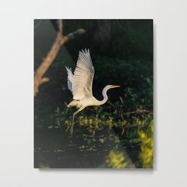 White Egret Heron 2 Metal Print