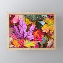 Indian Summer 4 Framed Mini Art Print