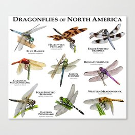 Dragonflies of North America Canvas Print