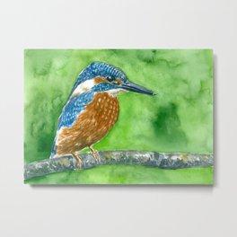 Kingfisher bird Metal Print