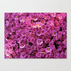 Pink  Flurry Canvas Print