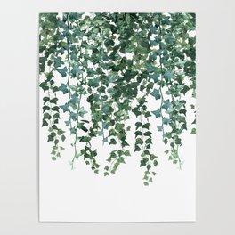 Ivy Vine Drop Poster