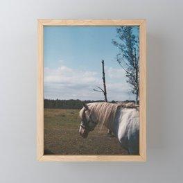 Horse in fly storm Framed Mini Art Print