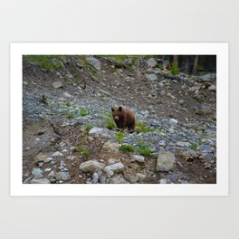 Black bear cub in Jasper National Park | Alberta Art Print
