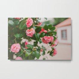 Camellias Metal Print