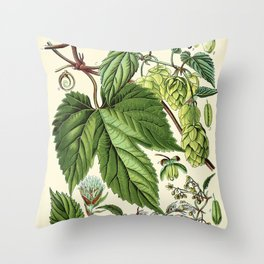 Humulus lupulus (common hop or hops) - Vintage botanical illustration Throw Pillow