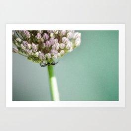 Spider in a Garlic Flower Art Print