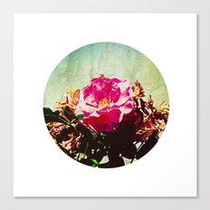 spring petals Canvas Print