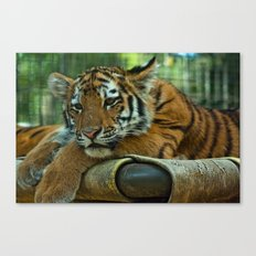 Baby Tiger Canvas Print