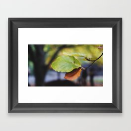 Central Park Fall Series 6 Framed Art Print