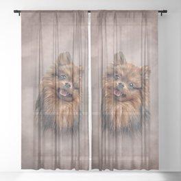 Drawing Dog Pomeranian Spitz Sheer Curtain