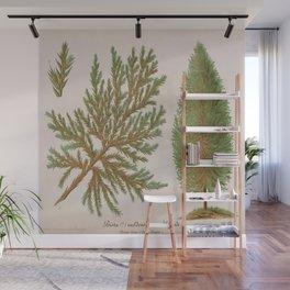 Biota Hybrid Evergreen Vintage Botanical Floral Flower Plant Scientific Wall Mural