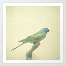 Bird Study #3 Art Print