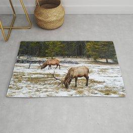 Jasper Locals- Male Elk/Wapiti Rug