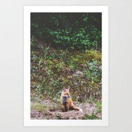 Fox & Foliage Art Print