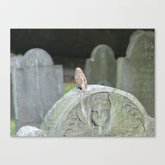 Sparrow in King's Chapel Burying Ground Boston Canvas Print