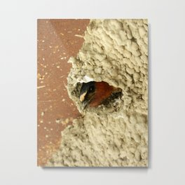 Cliff Swallow Home Sweet Home Metal Print
