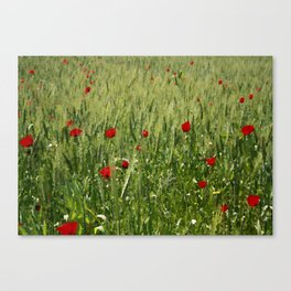 Red Poppies Growing In A Corn Field  Canvas Print