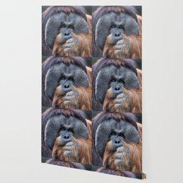 Sumatran Orangutan Wallpaper