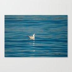 Blackhead gull 1063 Canvas Print
