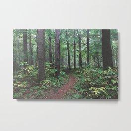 Pfeiffer Arboretum III Metal Print