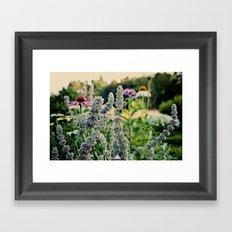 Flight Of The Bumblebee...  Framed Art Print
