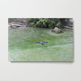 Swimming Penguin Metal Print