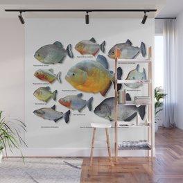 Piranha family Wall Mural