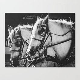 Shire Sisters Canvas Print