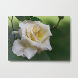 Rose From Archanes Metal Print