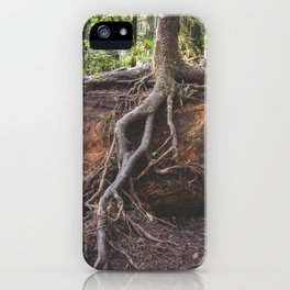 Jedediah Smith State Park - Forest Tree iPhone Case