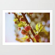 almonds in april Art Print