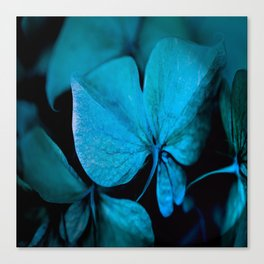 Shiny turquoise petals on a black background - #society6 #buyart Canvas Print