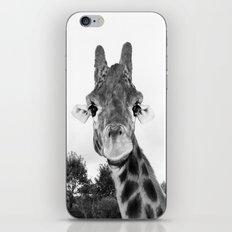 Giraffe. B+W. iPhone & iPod Skin