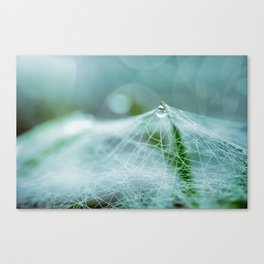 A large spider web on the ground Canvas Print
