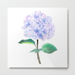 purple blue hydrangea Metal Print