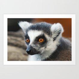 Ring tailed Lemur (Lemur catta) close up portrait Art Print
