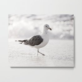 Black and White Seagull Beach Photography, Neutral Grey Seagulls Bird, Gray Shore Birds, Seashore Metal Print