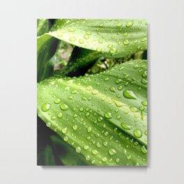 Green After Rain - The Garden Series Metal Print