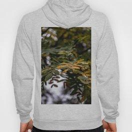 Autumnal leaves on tree Hoody