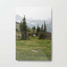 Mountain Goat Metal Print