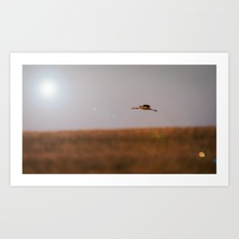 Sunbound Art Print